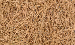 Pine Needle Background Stock Photo