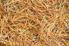 Pine Needle Background Stock Photo