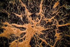 Pine Needles. Detail of orange pine needles on a black stump stock images