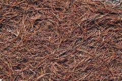 Pine needles. Dry pine needles Royalty Free Stock Photography