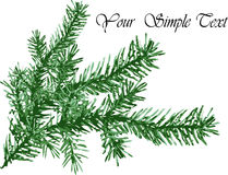 Pine needles background Stock Photography