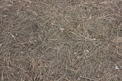 Pine needles on ground Stock Images