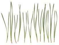 Free Pine Needles Isolated On White Stock Photography - 89665342