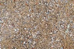 Pine needles and small rubble Royalty Free Stock Photos