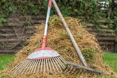 Pine needles were raked together in a heap stock images