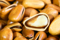 Pine nut Royalty Free Stock Image