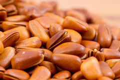 Pine nut Royalty Free Stock Images