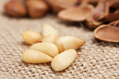 Pine Nut Stock Photography