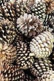 The Pine Nut Stock Photos