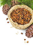 Pine nut Stock Images