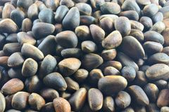 Pine nut is an edible fruit that is extracted from pine cones. Pine nut seeds of Siberian pine, are used in food purified, extracted from cones, delicious stock image