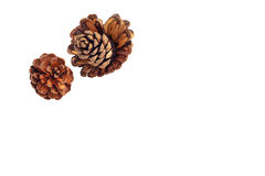 Pine nut Stock Image