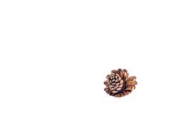 Pine nut Royalty Free Stock Photo