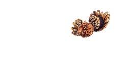 Pine nut Stock Photos
