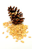 Pine Nuts. Pine cone and nuts is isolated on a white background Stock Photo