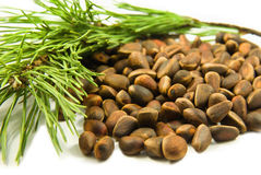 Pine nuts. And branch  on white background Royalty Free Stock Photography