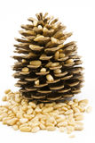 Pine nuts 2 Stock Images