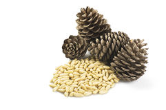 Pine nuts royalty free stock photos