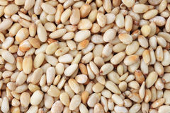 Free Pine Nuts Stock Images - 21507694