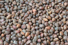 Pine nuts. A considerable quantity of pine nuts Royalty Free Stock Photo