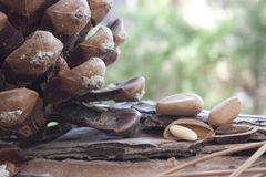 Pine nuts. In shell and pine cones Stock Photography