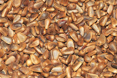 Pine nuts. The background of dried pine nuts Stock Photography