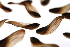 Pine nuts Royalty Free Stock Photography