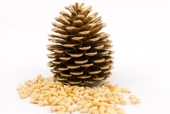 Pine nuts. Royalty Free Stock Photos