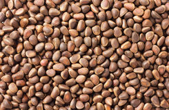 Pine nuts background Stock Photos