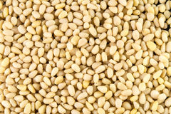 Pine nuts background royalty free stock images