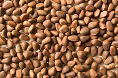 Free Pine Nuts Background Texture. Natural Food. Selective Focus Stock Image - 136561371