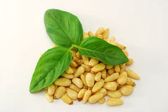 Pine nuts and basil Royalty Free Stock Photography