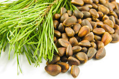 Pine nuts and branch. At left Stock Photography