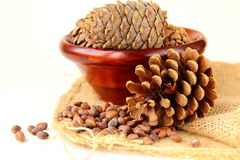 Pine nuts, with cedar Royalty Free Stock Photo
