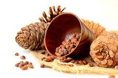 Pine nuts, with cedar Stock Images