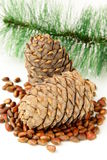 Pine nuts, with cedar cones and fir tree Stock Images