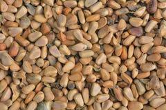 Pine nuts 7 Royalty Free Stock Photos