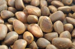 Pine Nuts Closeup Stock Photography
