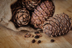 Pine nuts and cones Stock Photography