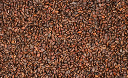 Pine nuts in the form of a background. Royalty Free Stock Images