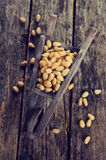 Pine nuts Royalty Free Stock Images
