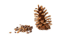 Pine nuts and a pine cone Stock Photo