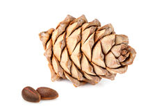 Pine nuts and pine cone isolated. Stock Photography