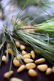 Pine nuts with pine tree branch Stock Photos