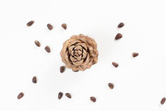 Pine nuts and ripe pine cone Royalty Free Stock Photo