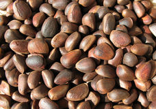 Pine nuts (seeds of Siberian pine) Royalty Free Stock Photography