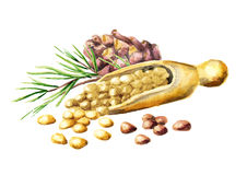 Pine nuts. Watercolor  illustration Stock Photo