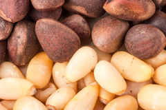 Pine nuts or whole peeled macro background Stock Photography