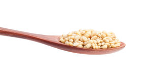 Pine nuts Stock Photography