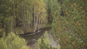 Through Pine and osier branches are visible fast river and birches on other side. stock video footage